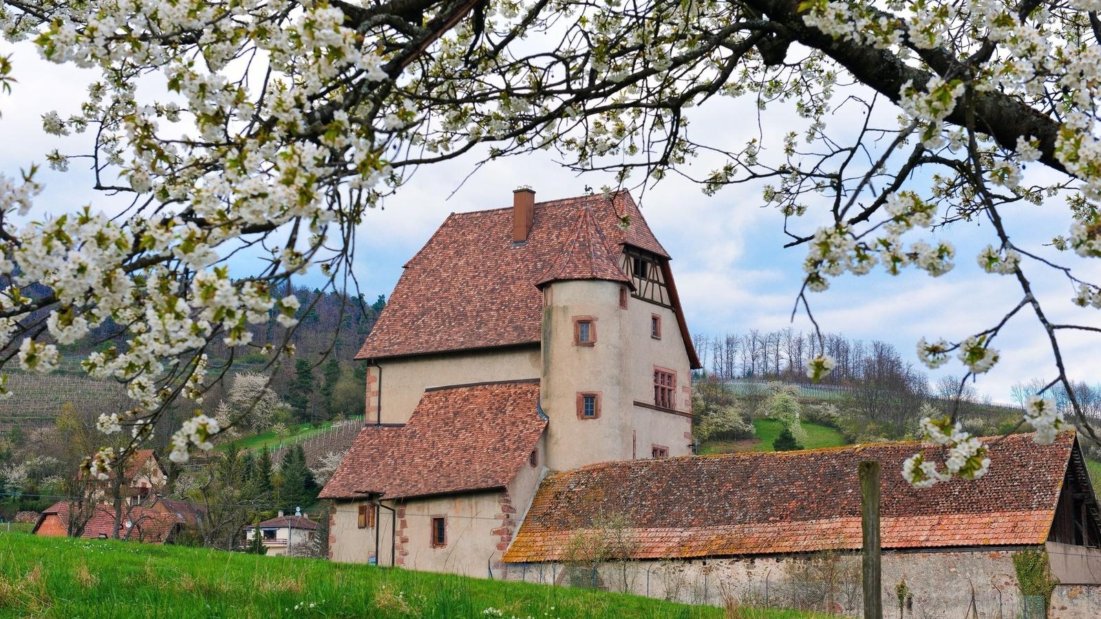 деревня, дом, белые цветы, цветут, весна