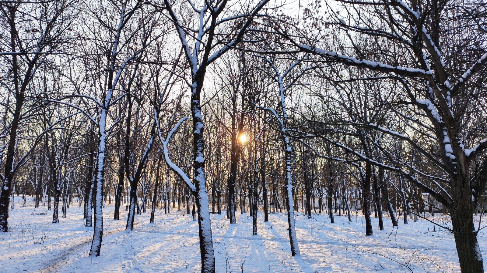 зима, снег, закат, солнце