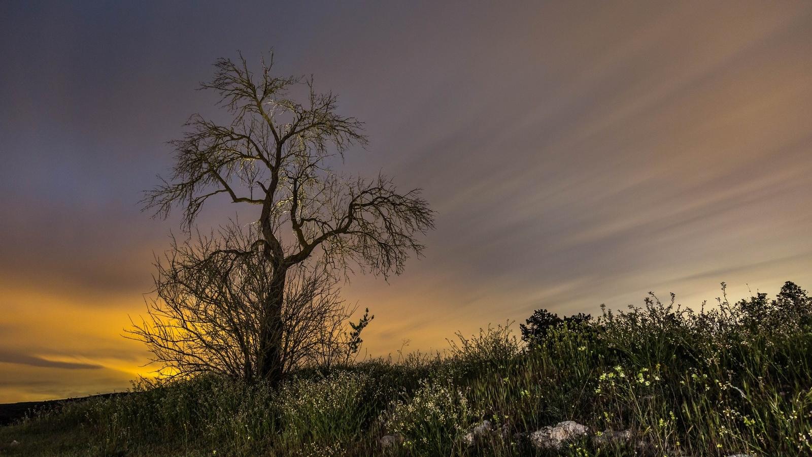 небо, дерево, свет