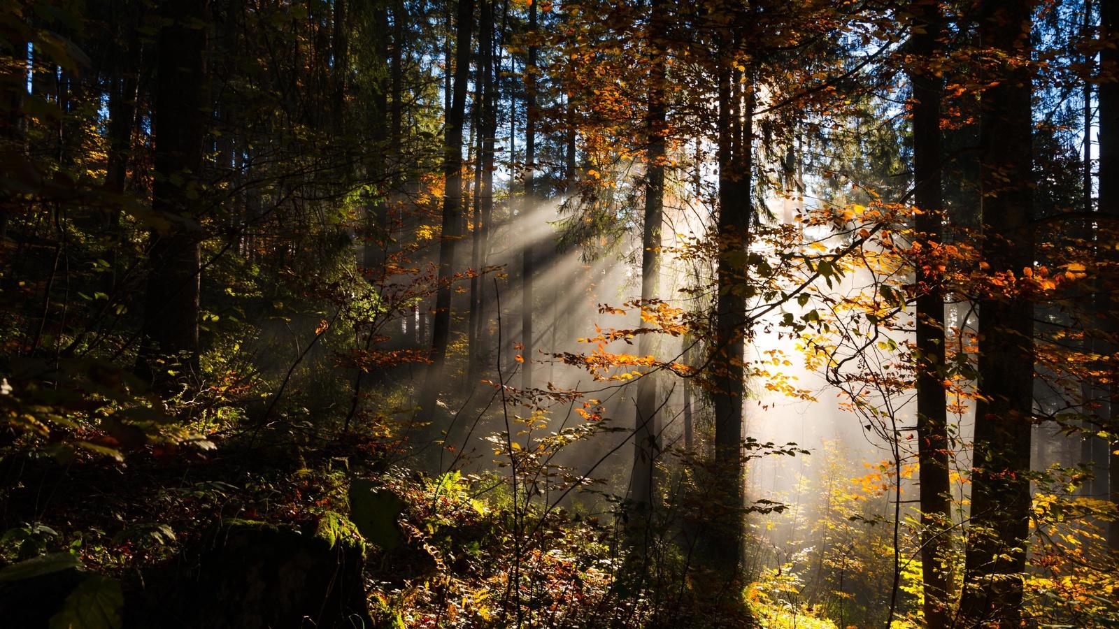 лес, лучи солнца, деревья, листва