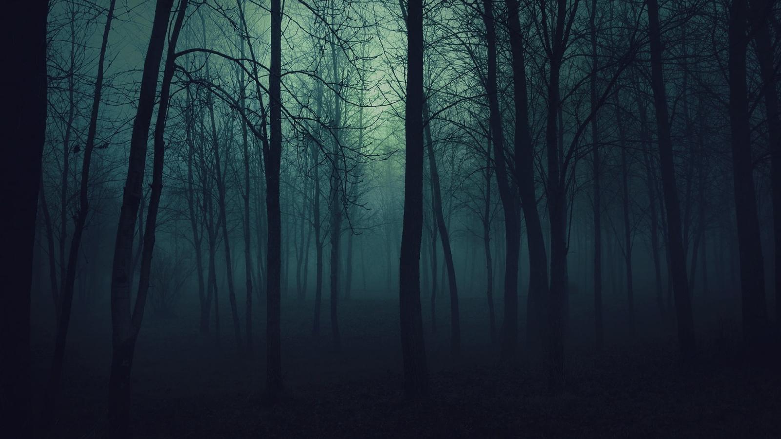 ночь, деревья, парк