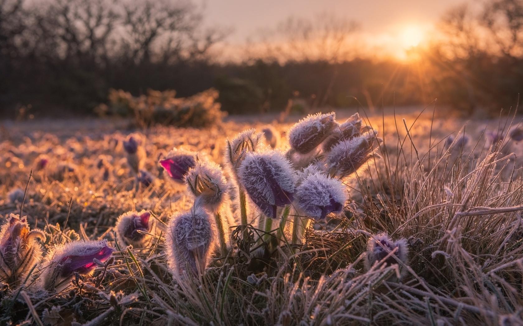 природа, весна, цветы, первоцветы, подснежники, трава