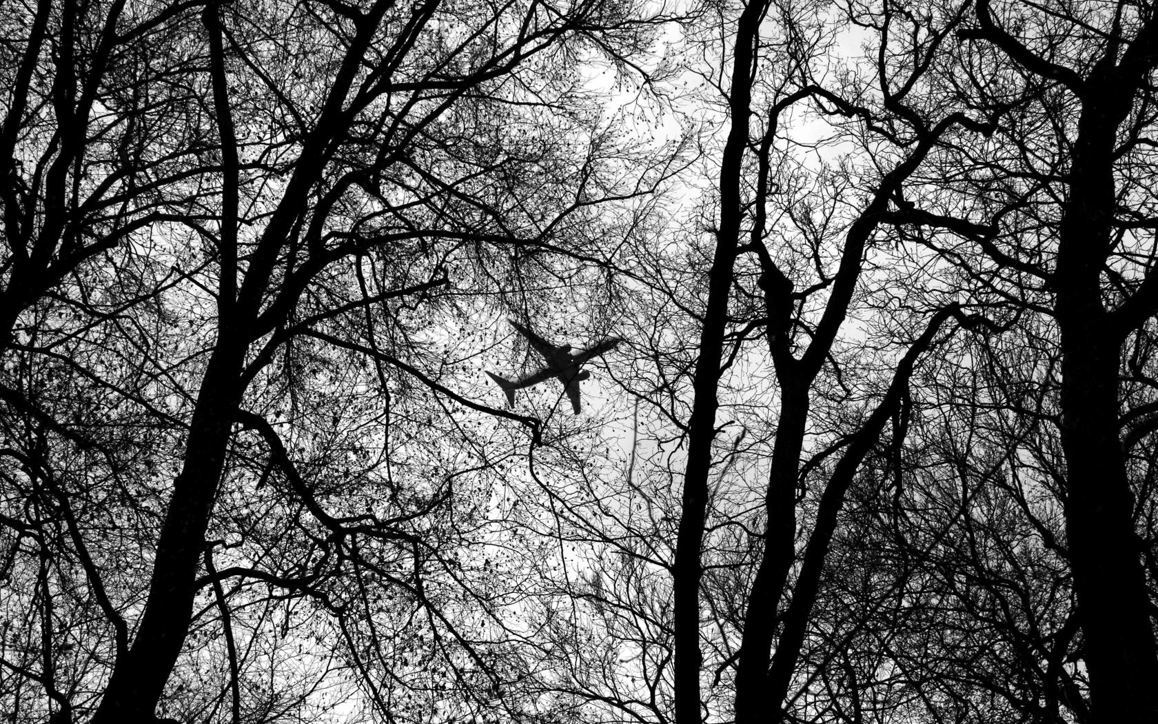 самолет, ветки, деревья