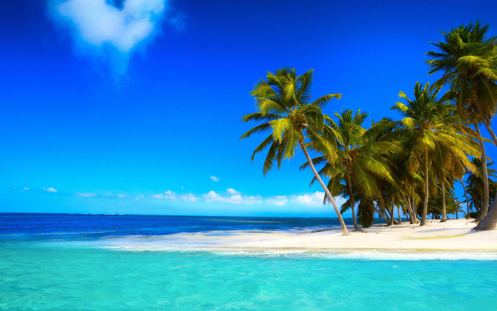 тропики, пальмы