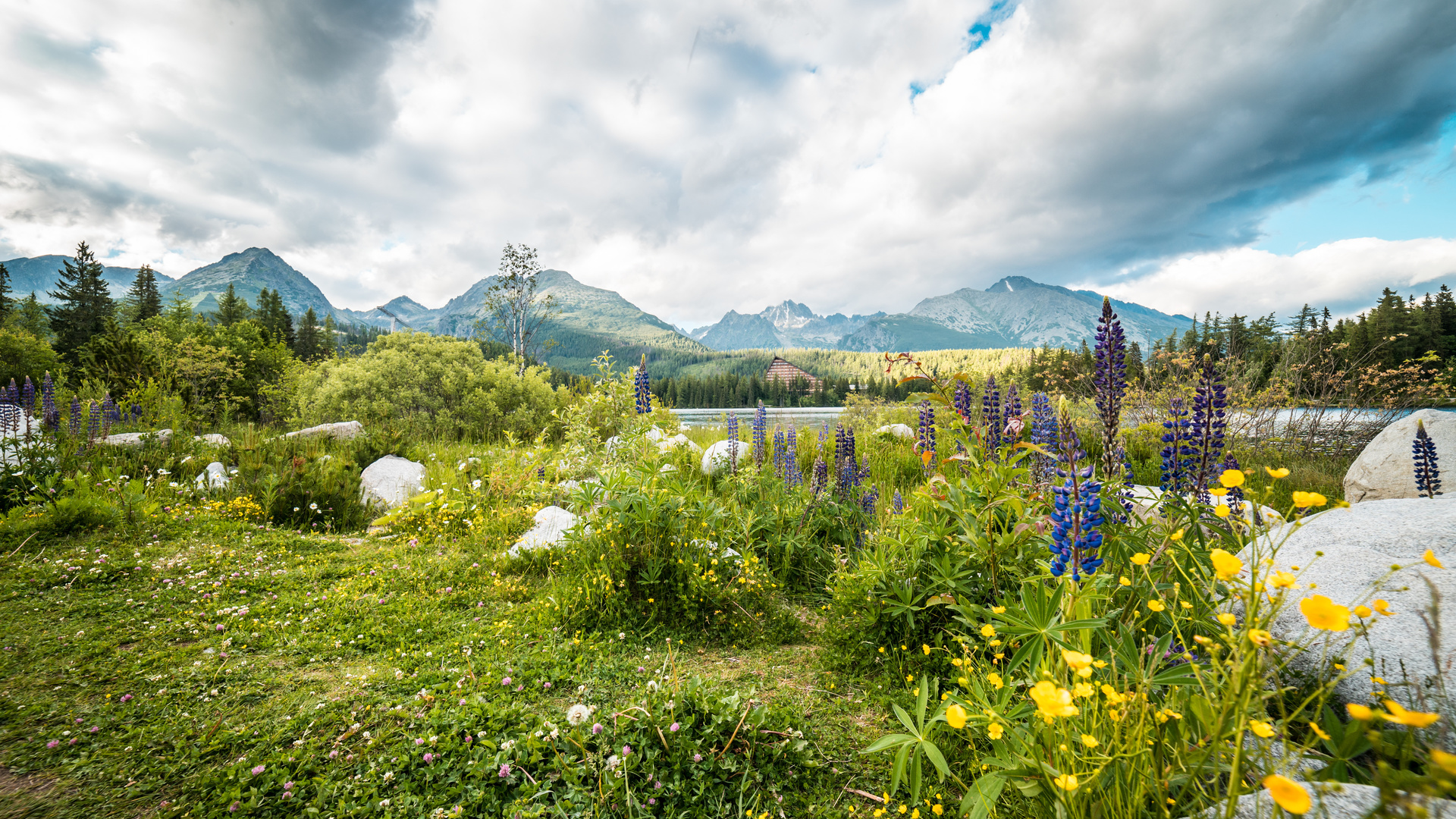 камни, люпин, пейзаж, горы, словения, tatra, mountains, трава, природа