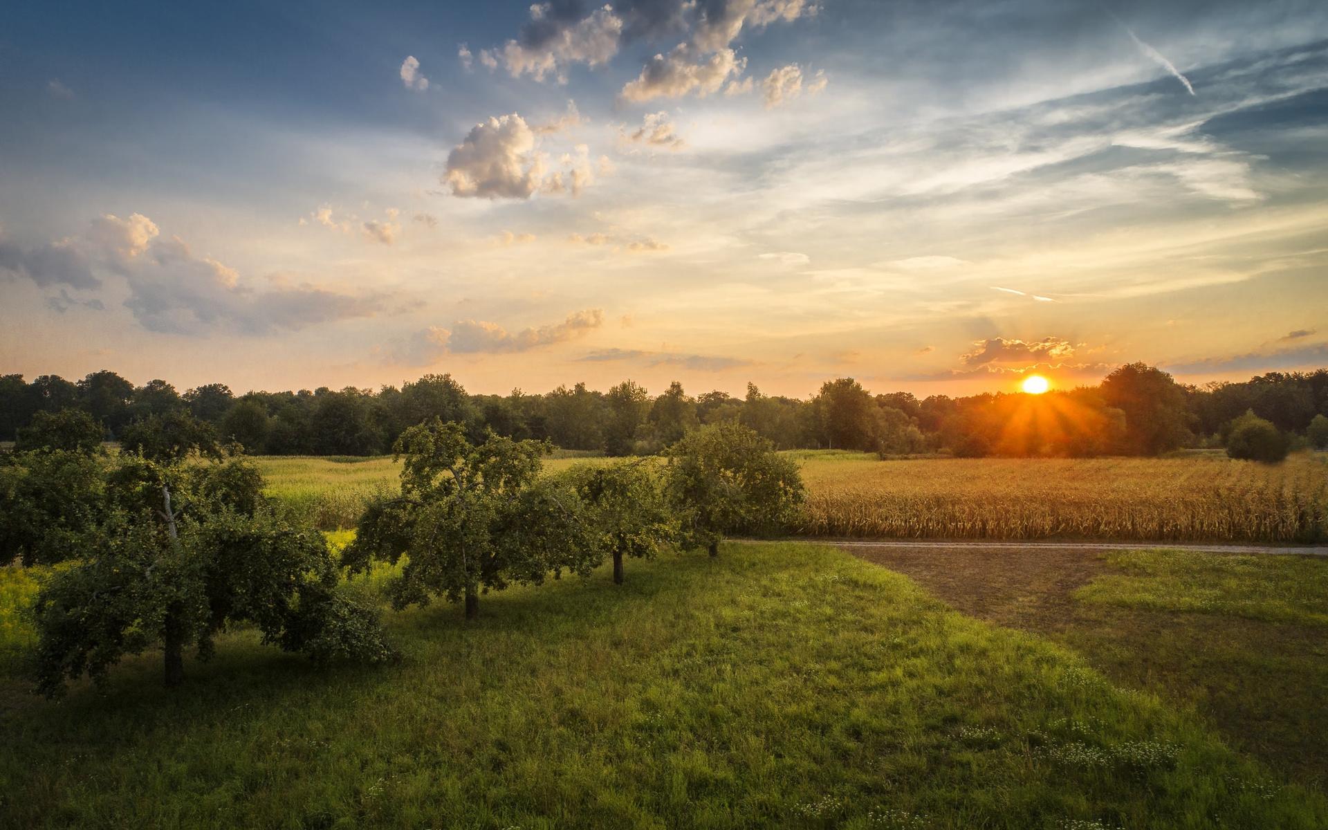 лето, зелень, вечер, закат