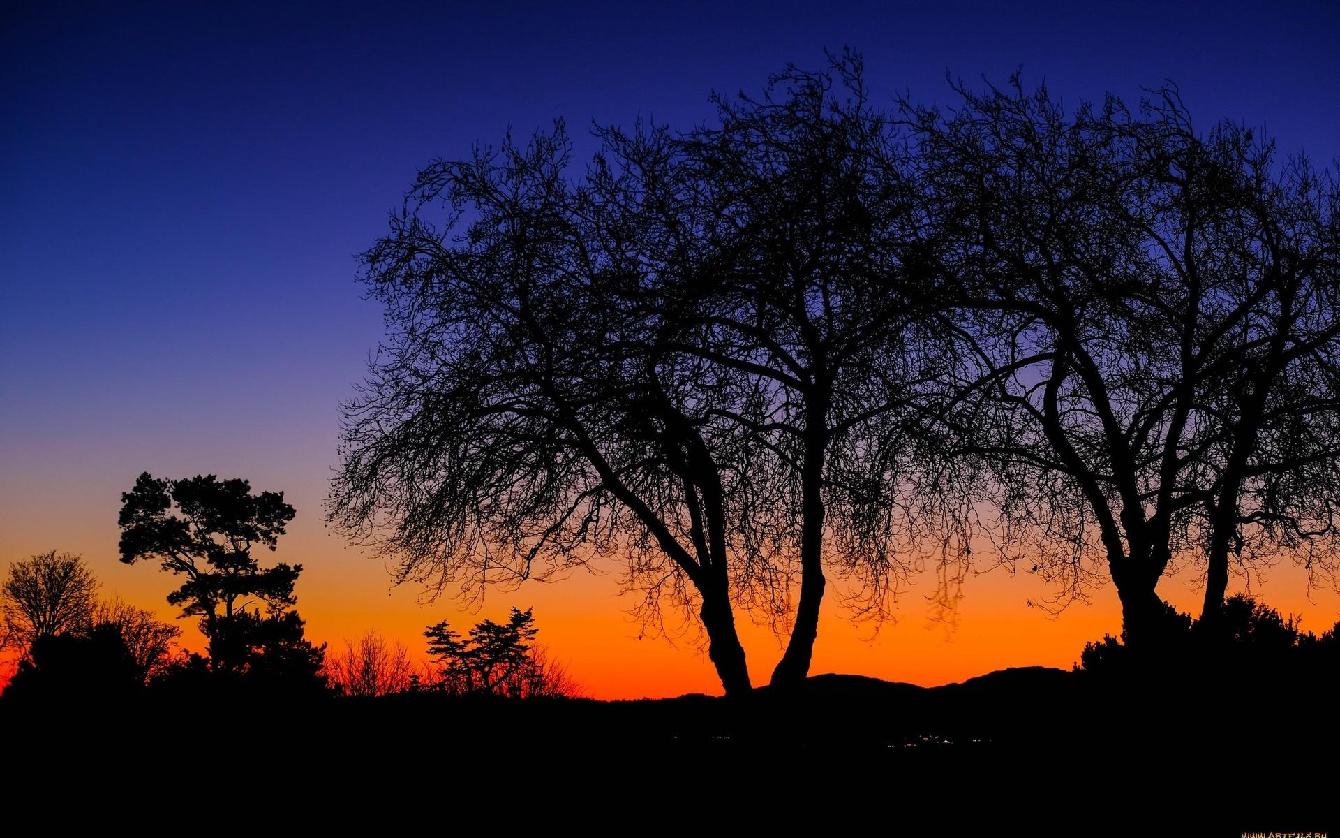 ночь, свет, деревья