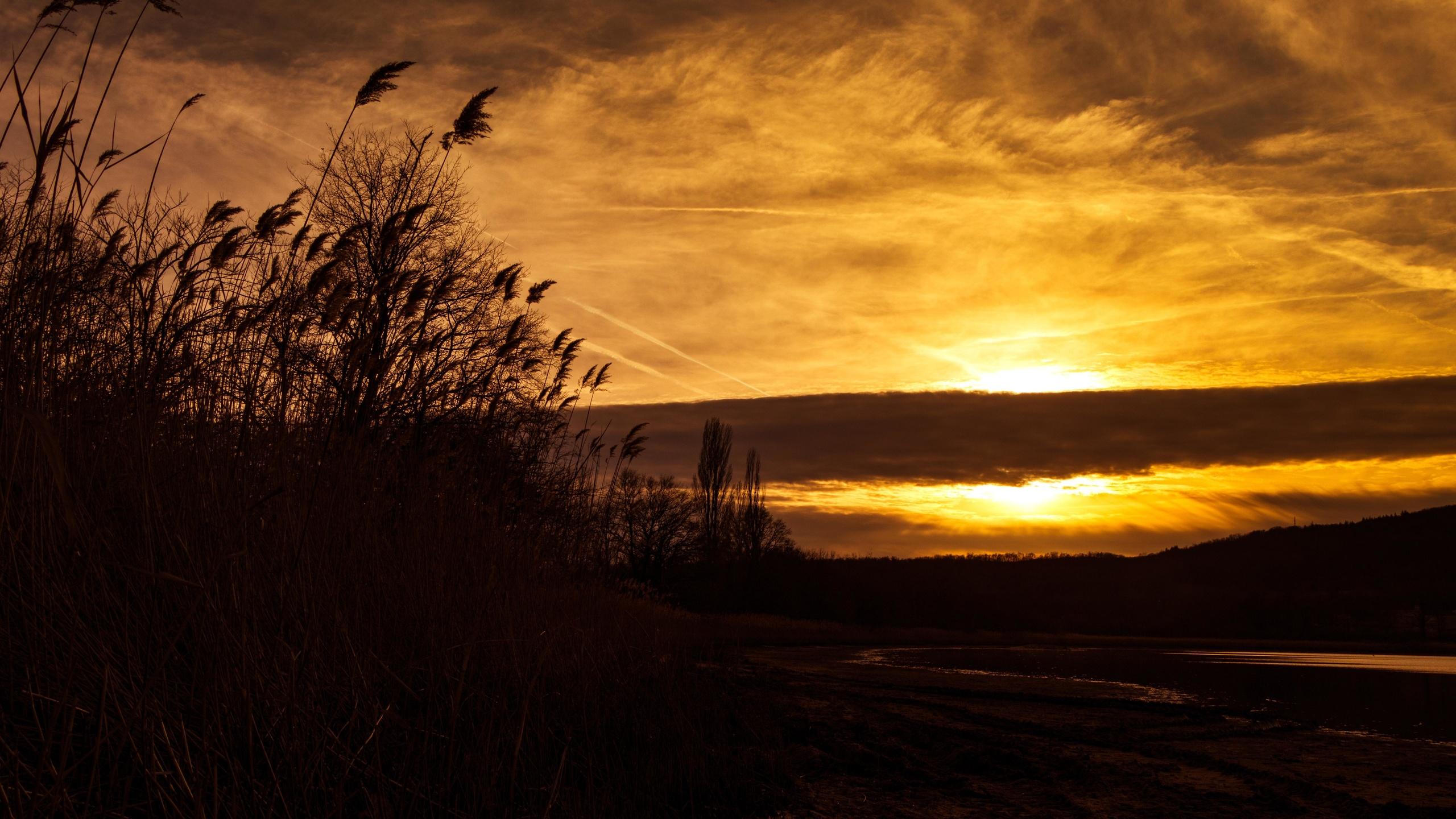 закат, колосья, силуэт, небо