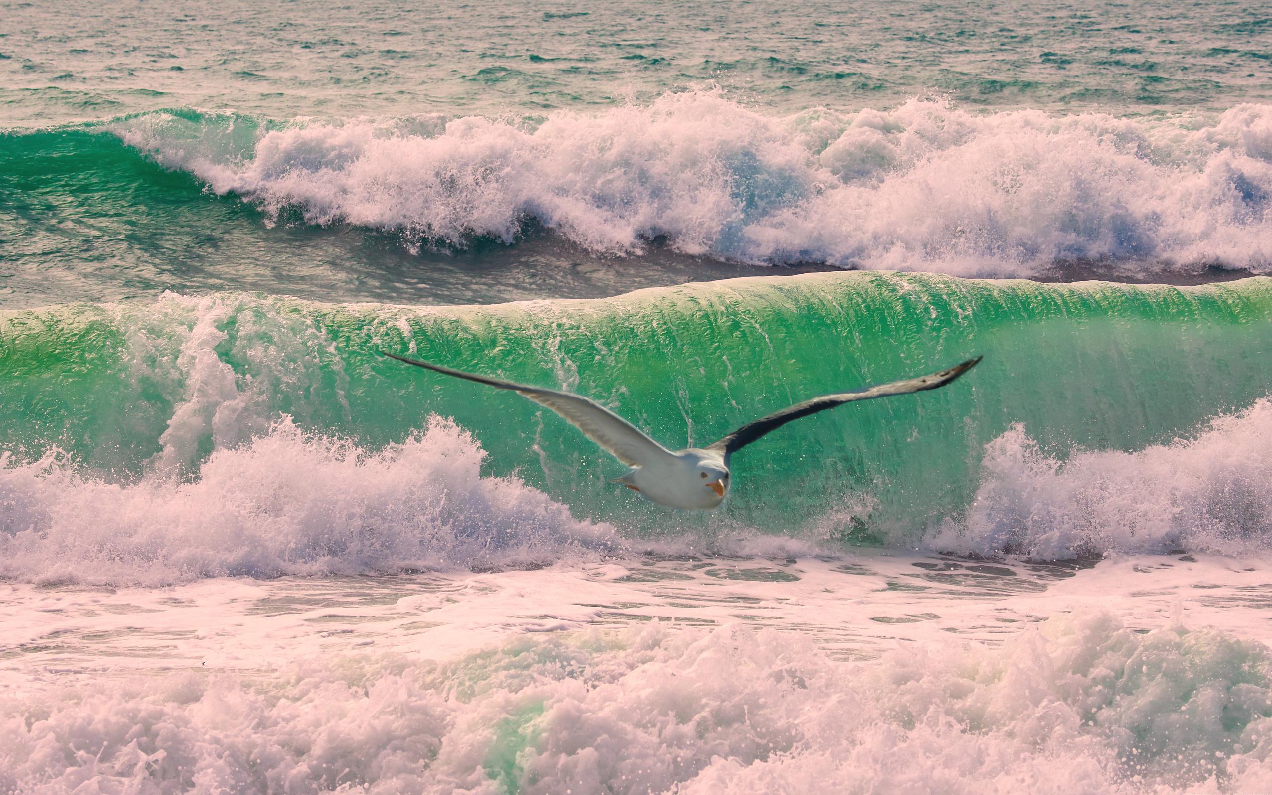 прибой, волны, океан, чайка