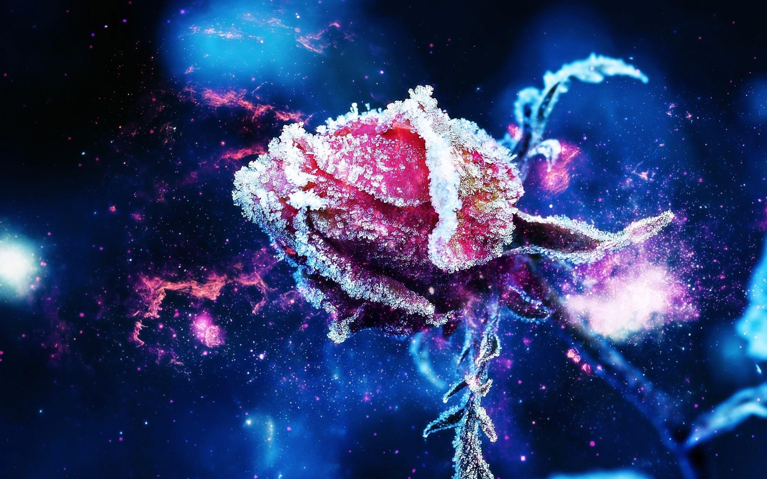 бутон, розы, иней
