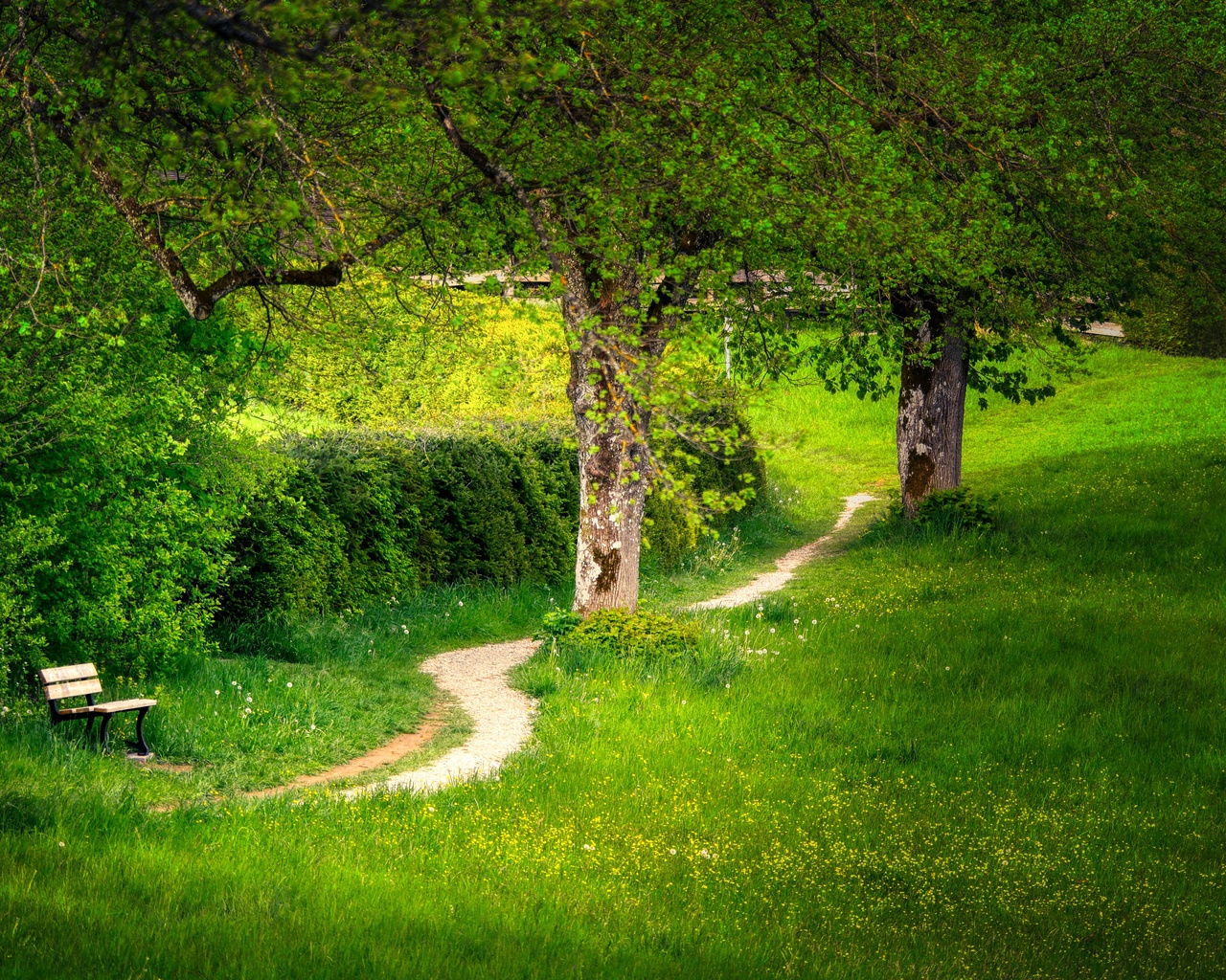 парк, скамейка, тропинка, трава