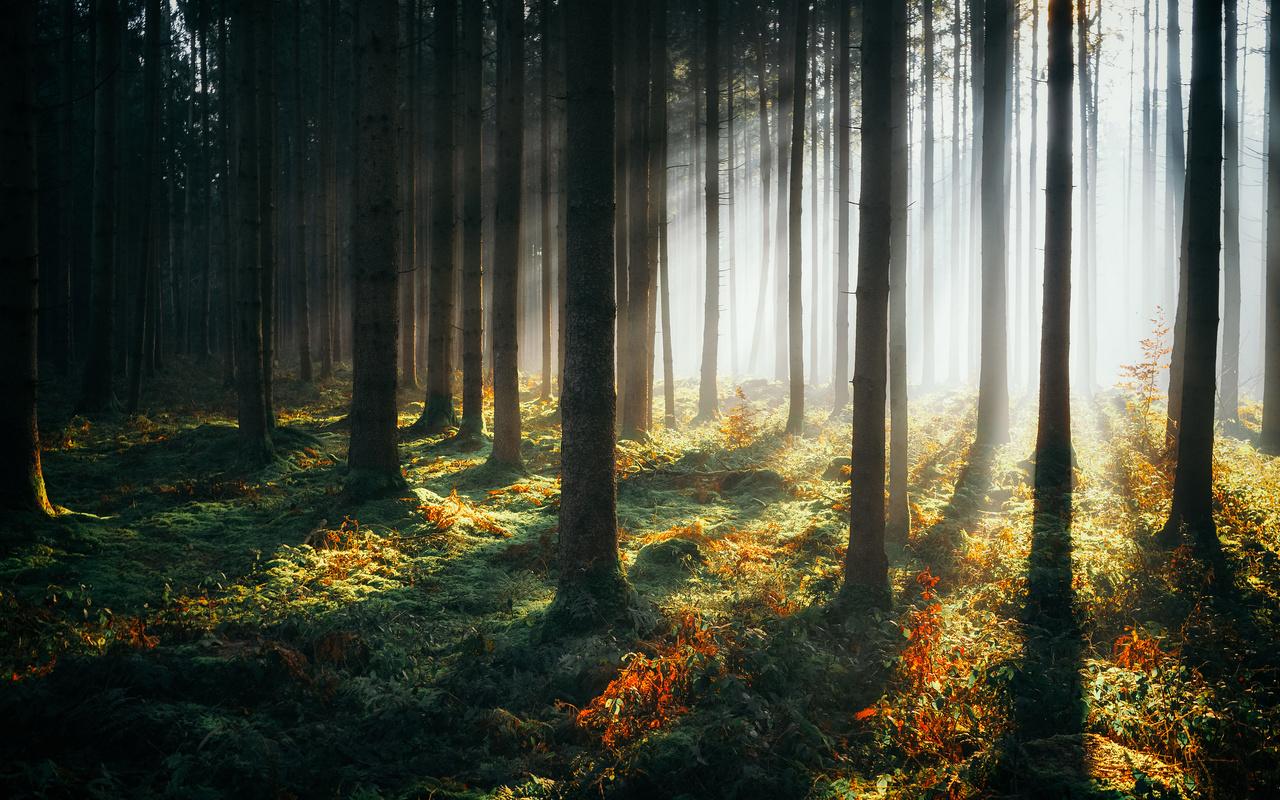 лес, деревья, лучи света, природа