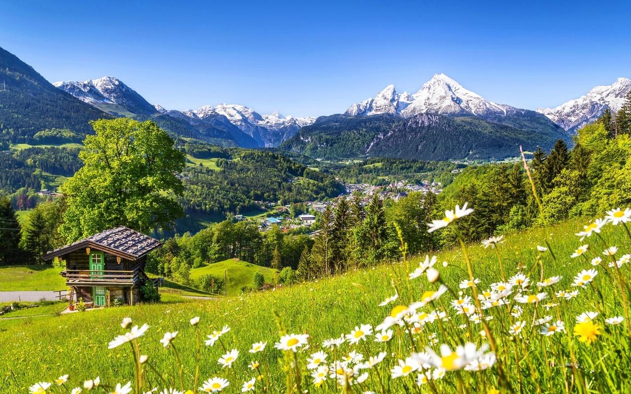 природа, цветы, горы, ромашки