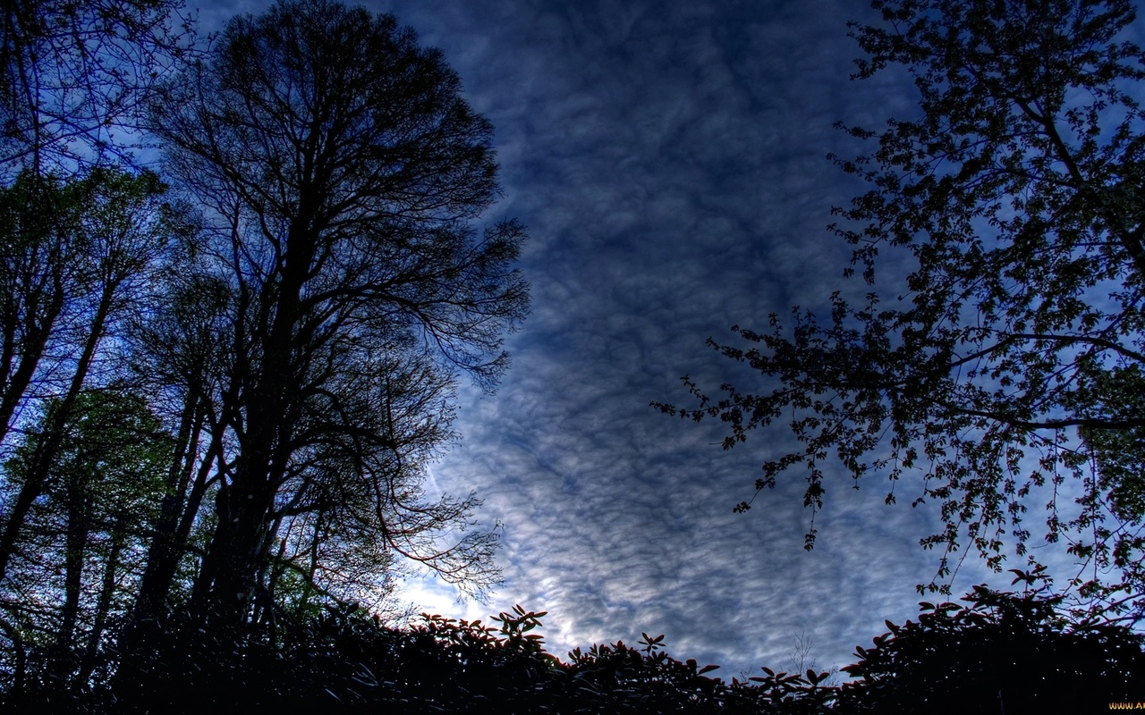 ночь, лес, небо