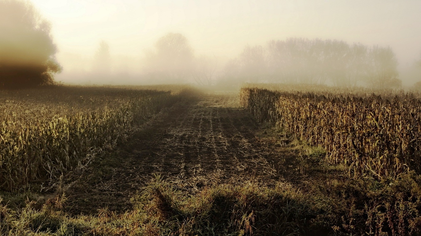поле, деревья, туман