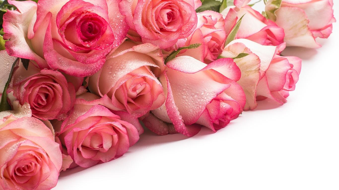 капли, розы, букет, воды, нежные, бутоны