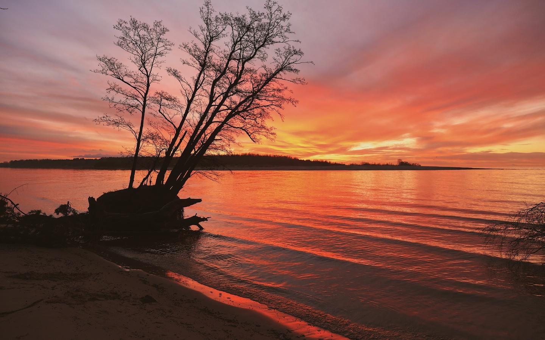 закат, деревья, природа, пейзаж, облака, красный, вечер