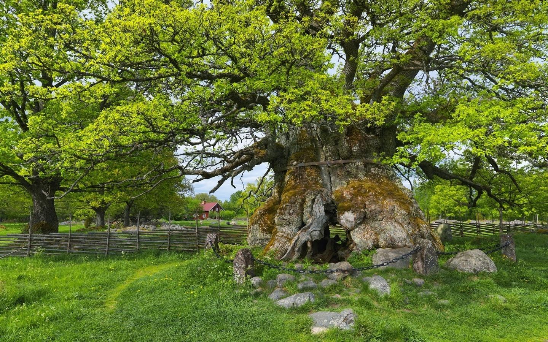 дерево, ветви, камни