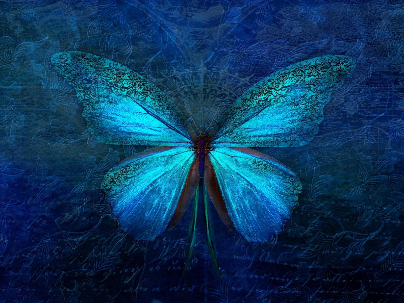 бабочка, насекомое