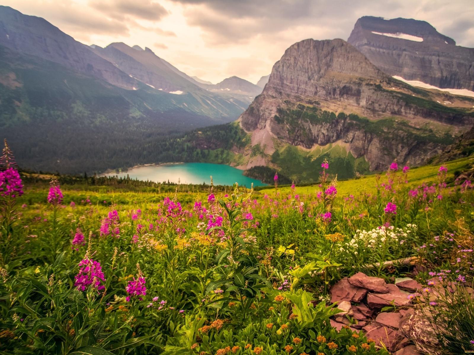 горы, цветы, озеро
