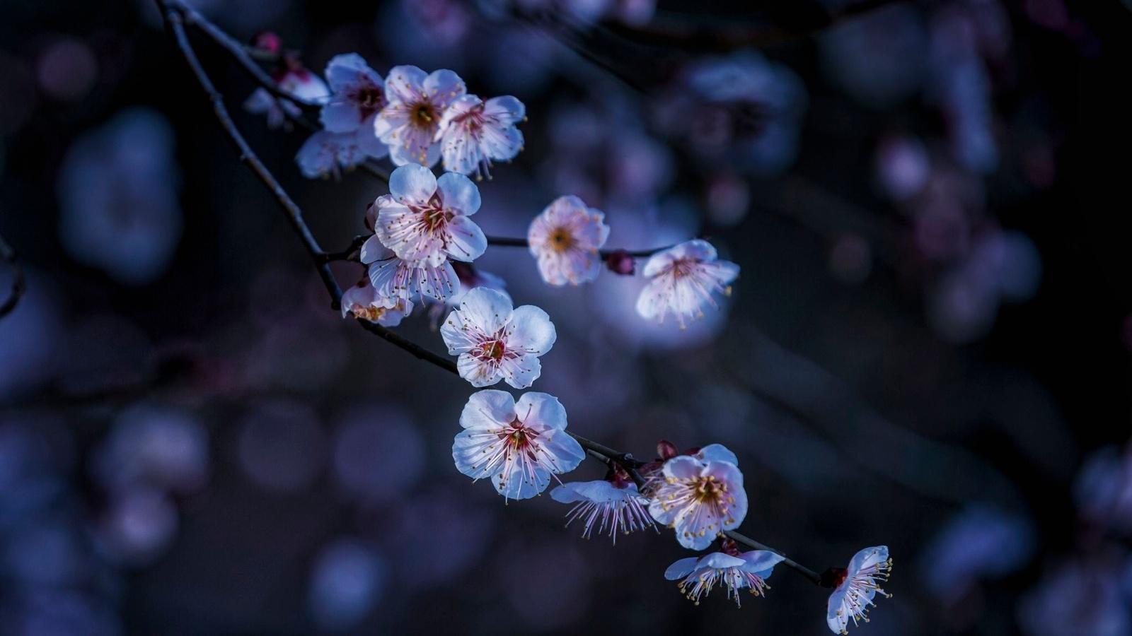 ветка, макро, цветение