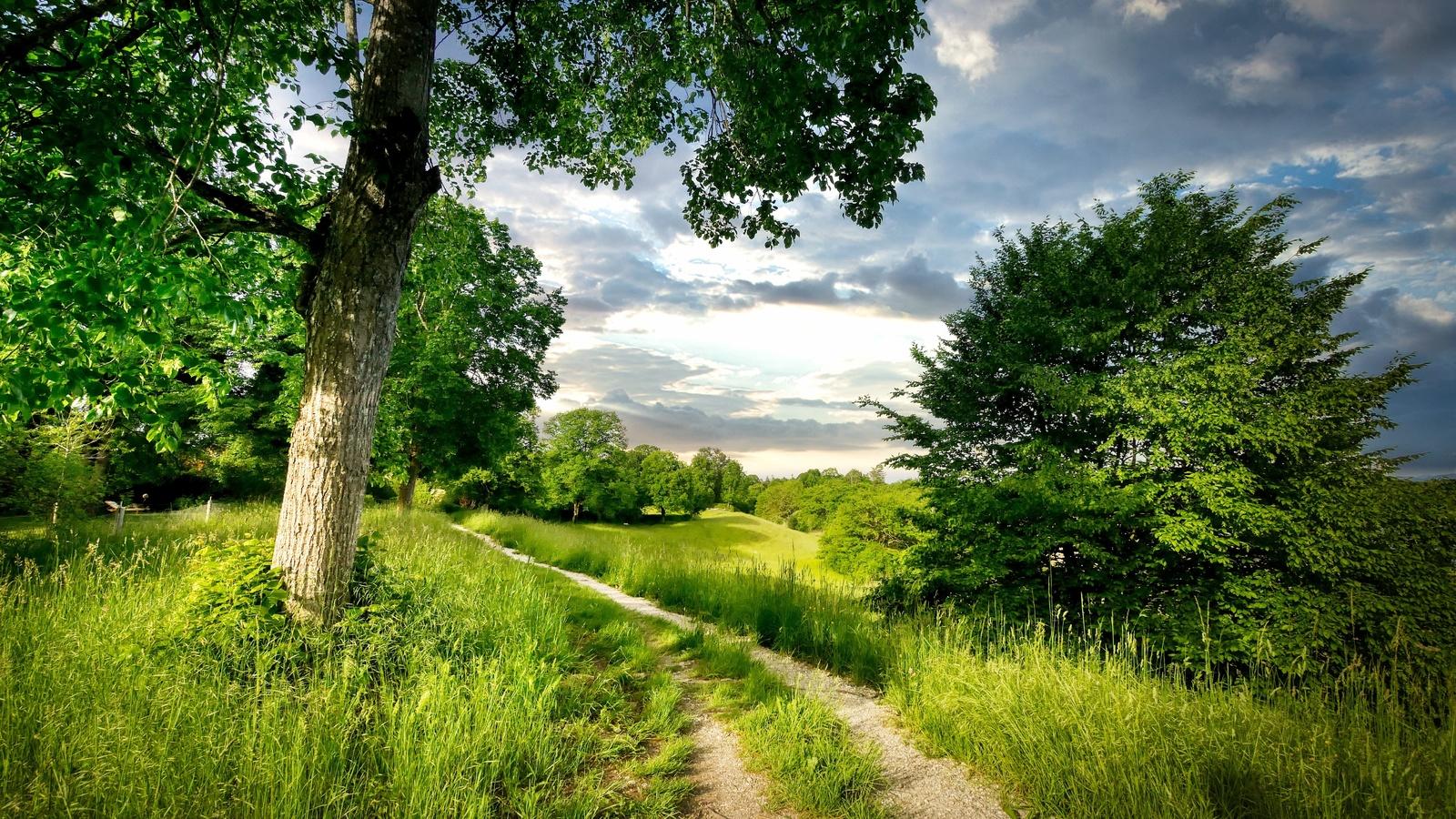 дерево, дорога, трава