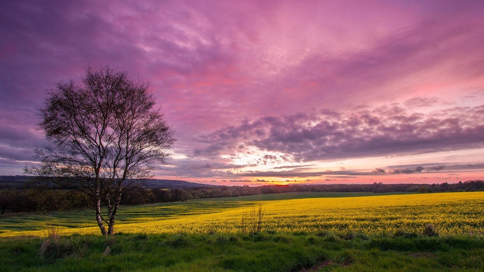 закат, рапс, поле, деревья, небо, облака