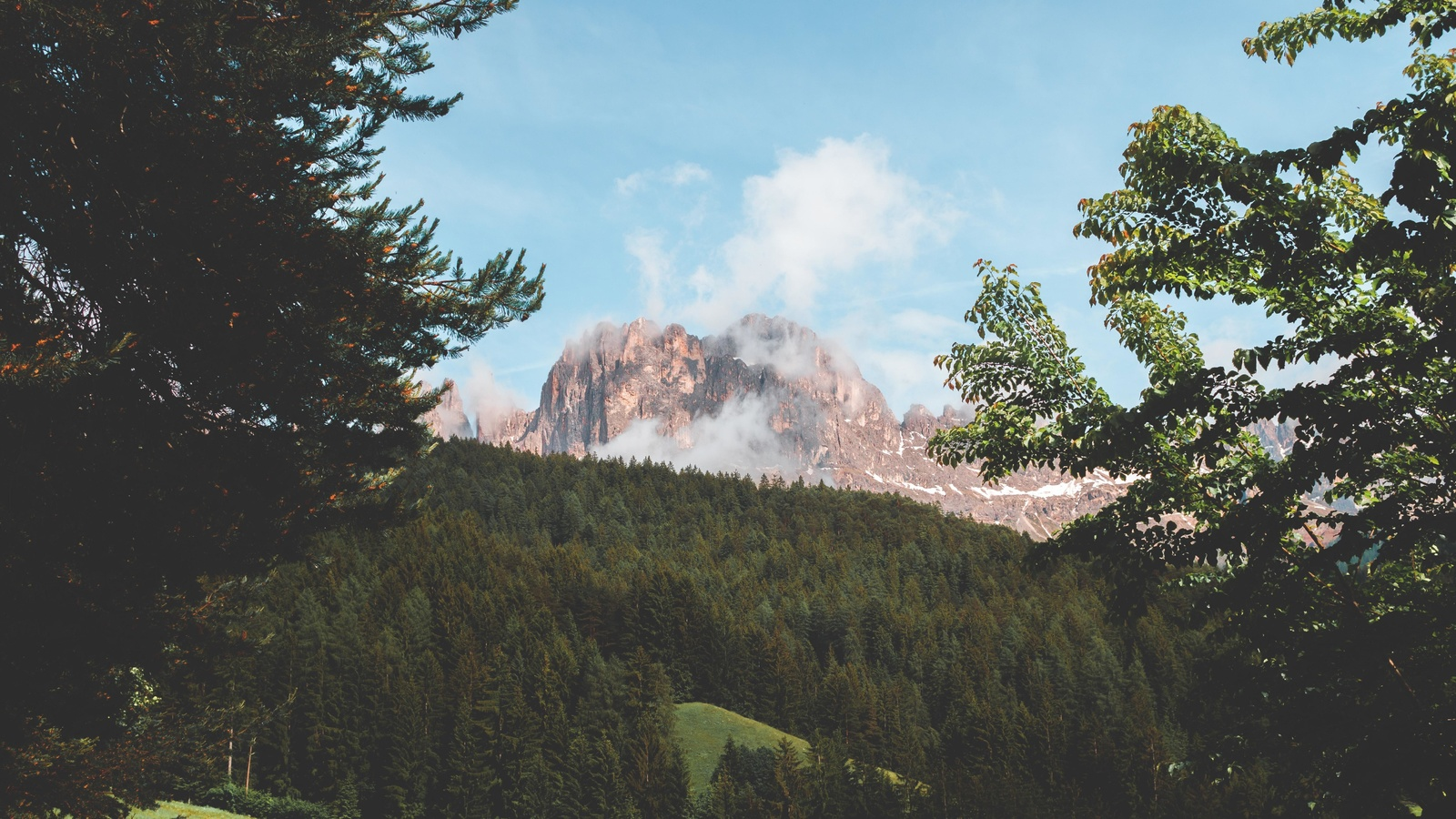 гора, туман, ветки, лес