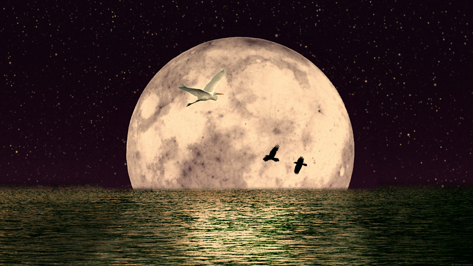 море, луна, птицы