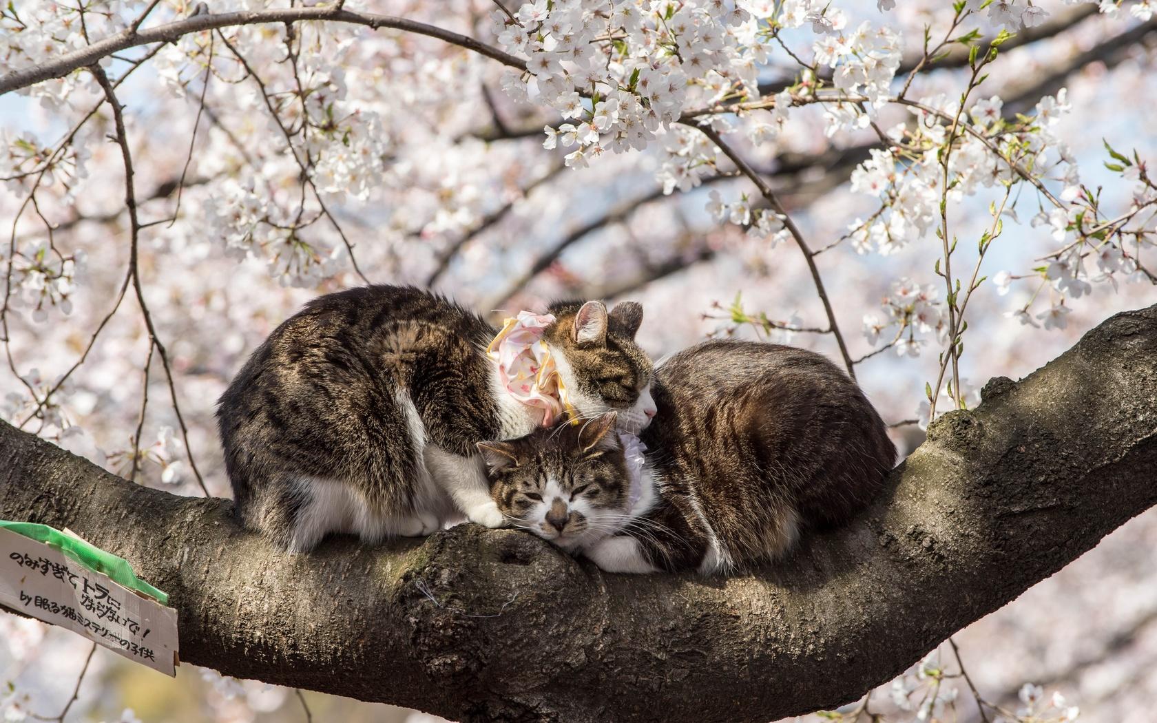 дерево, весна, животные