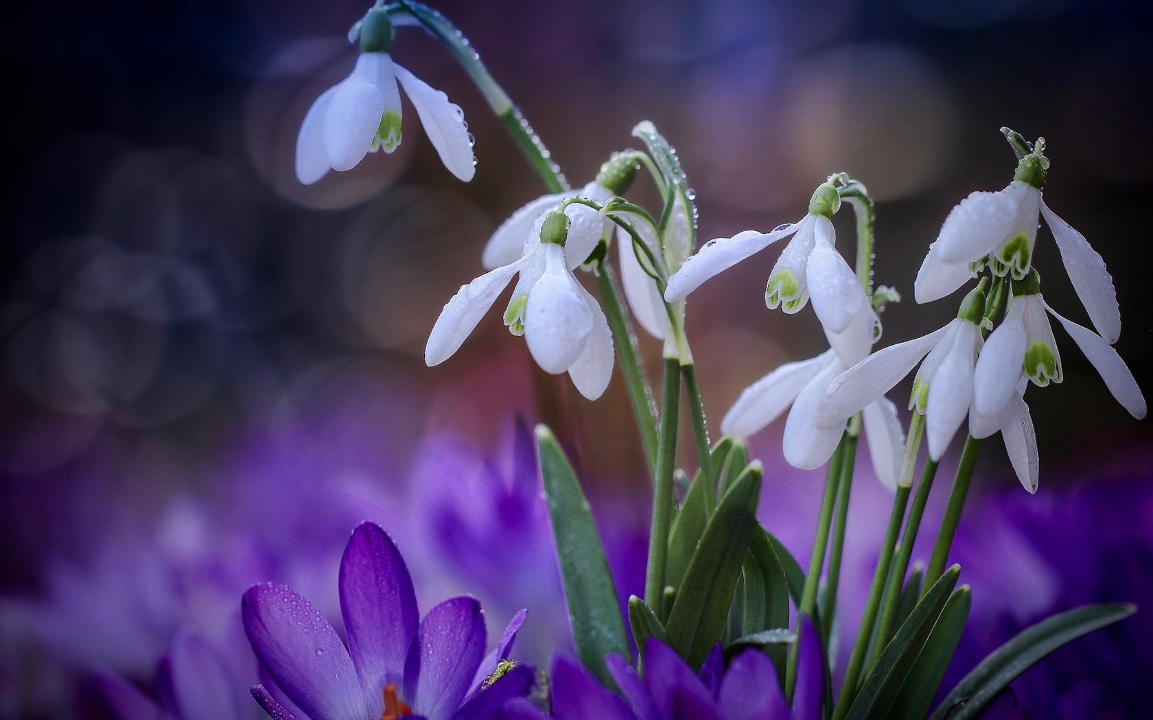 цветы, весна, блики