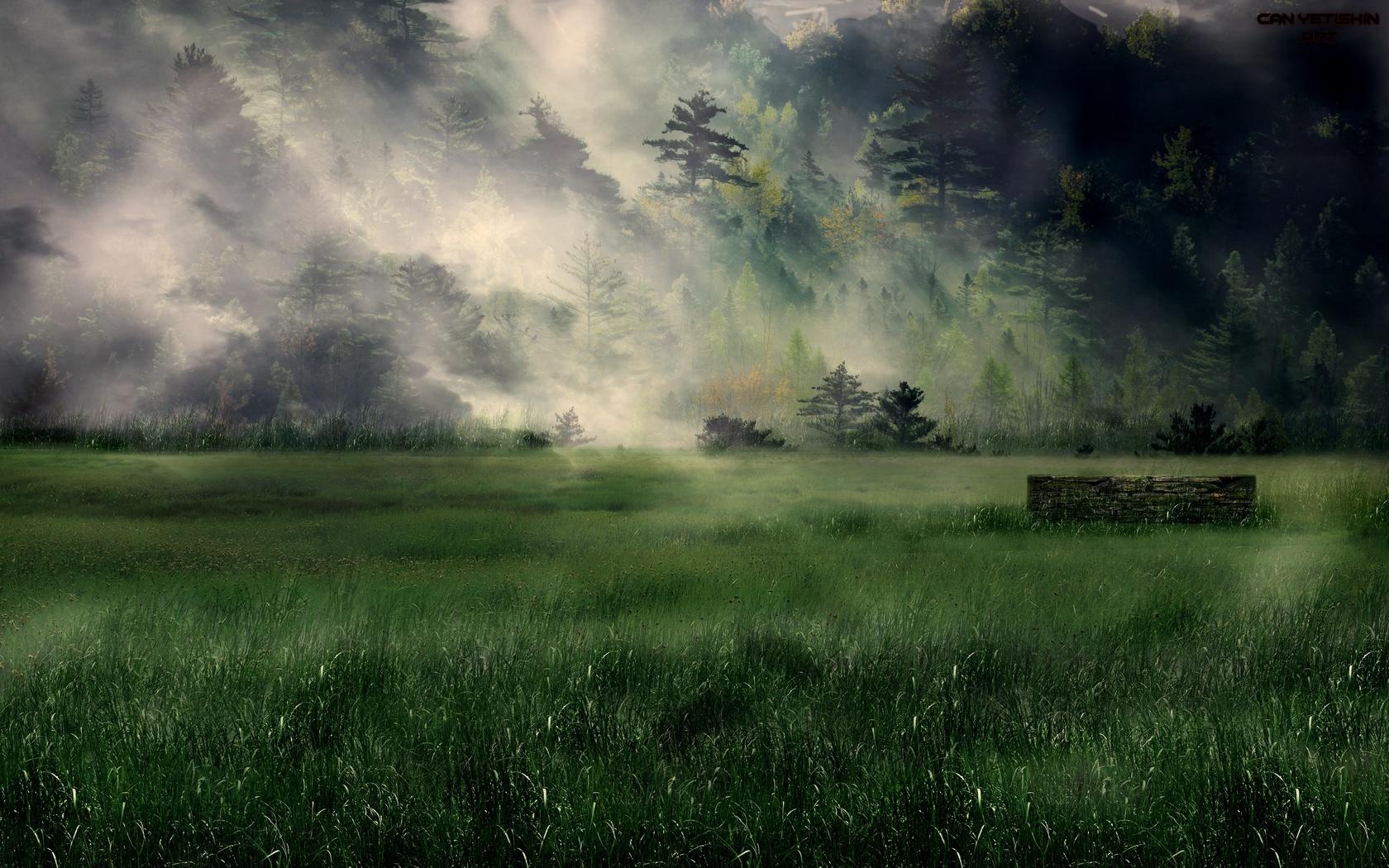 лес, деревья, туман, природа