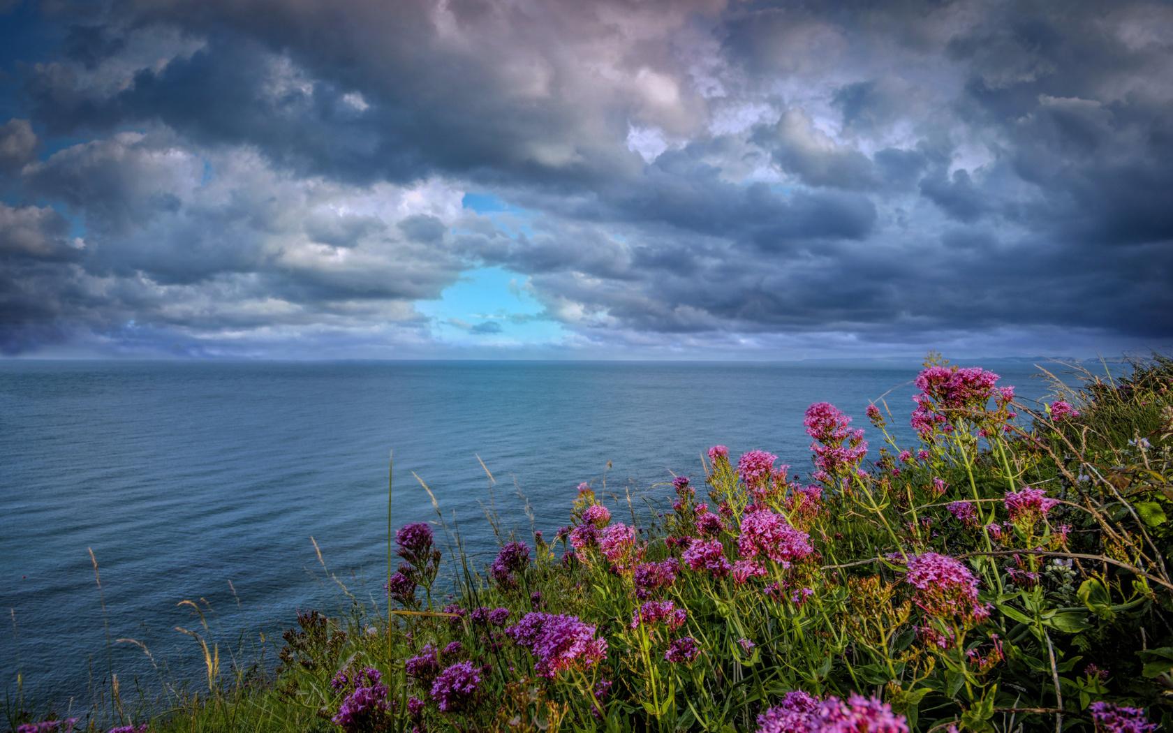 цветы, море, тучи