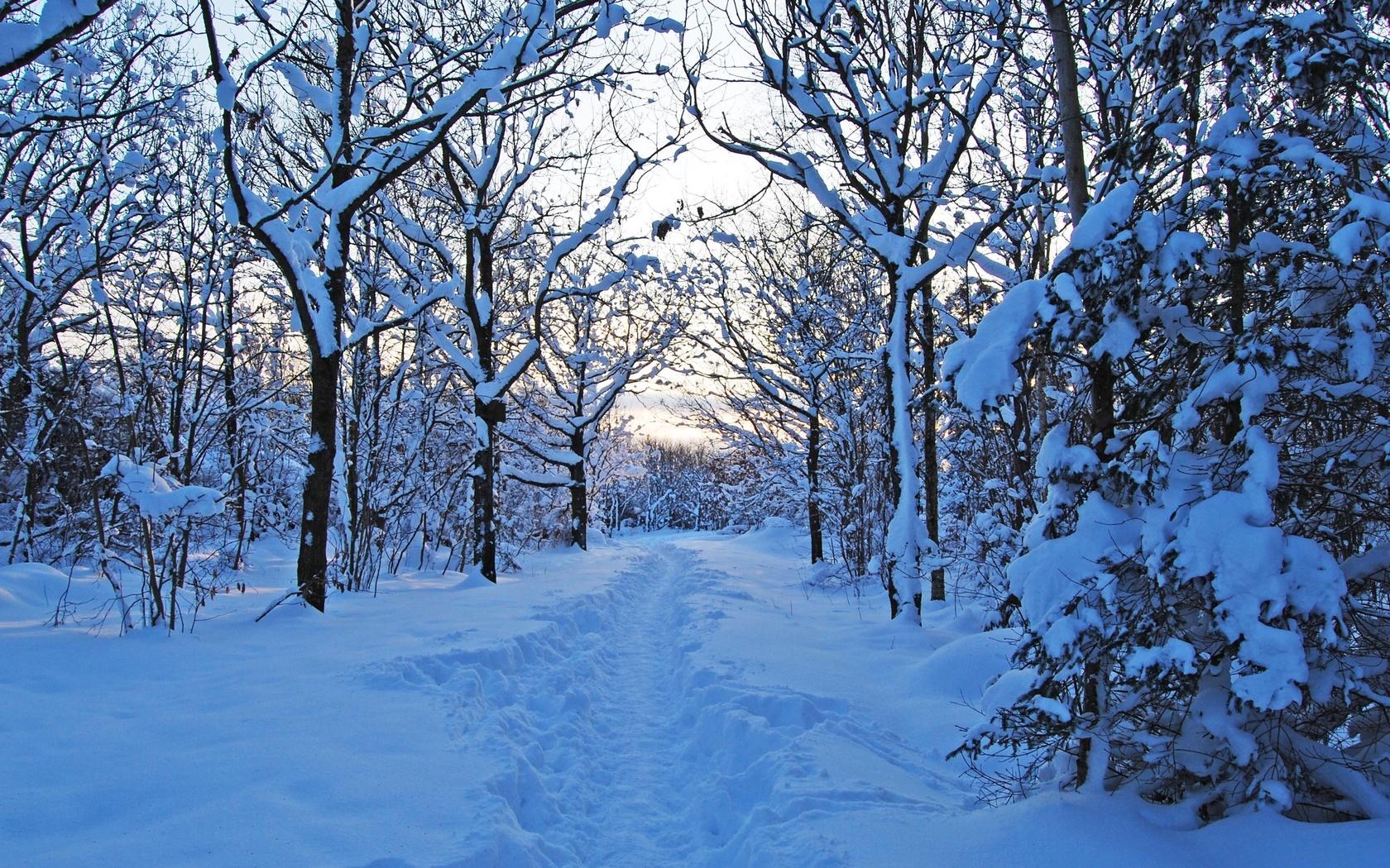 швеция, деревья, густой снег, зима