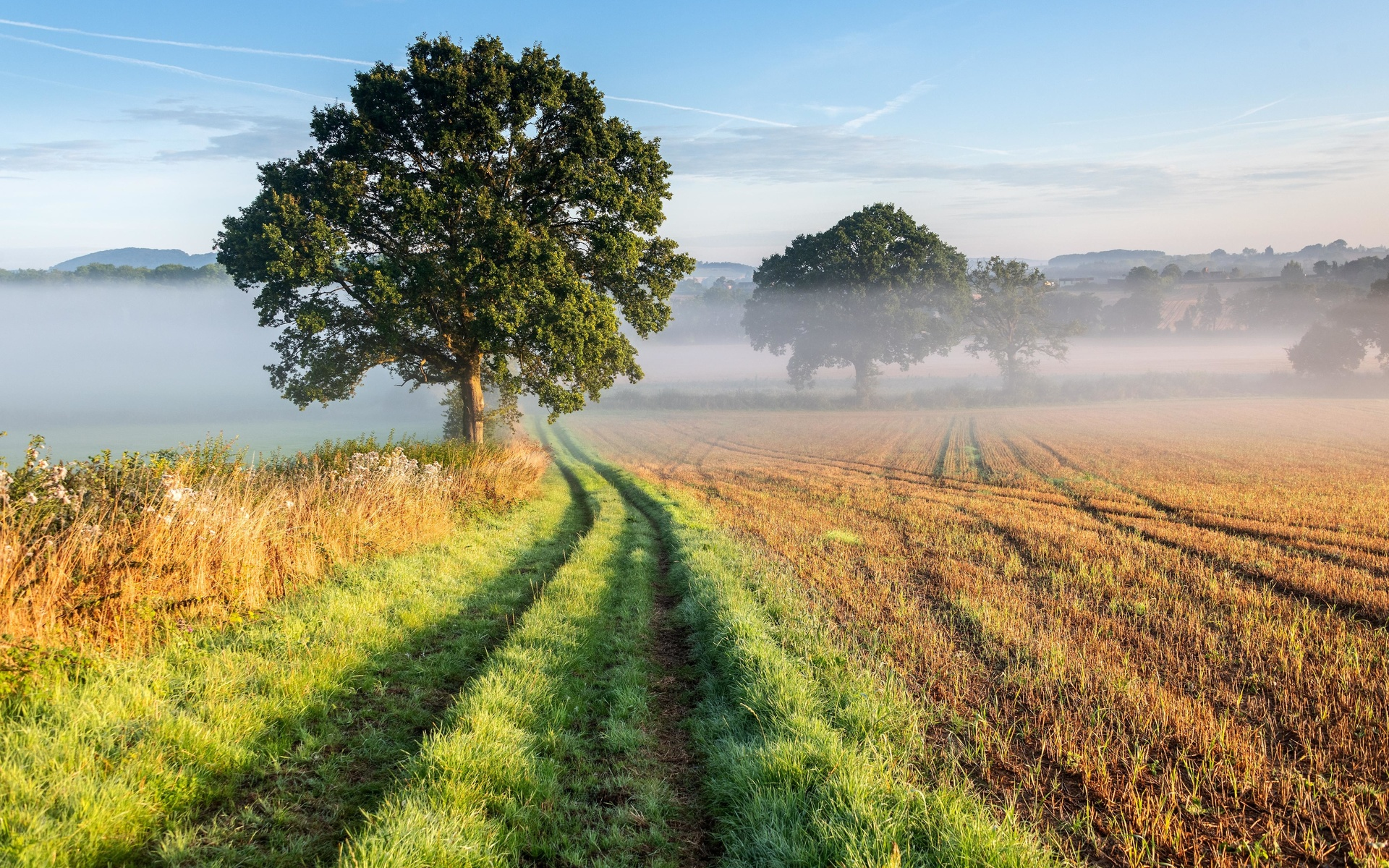 дерево, дорога, трава, туман
