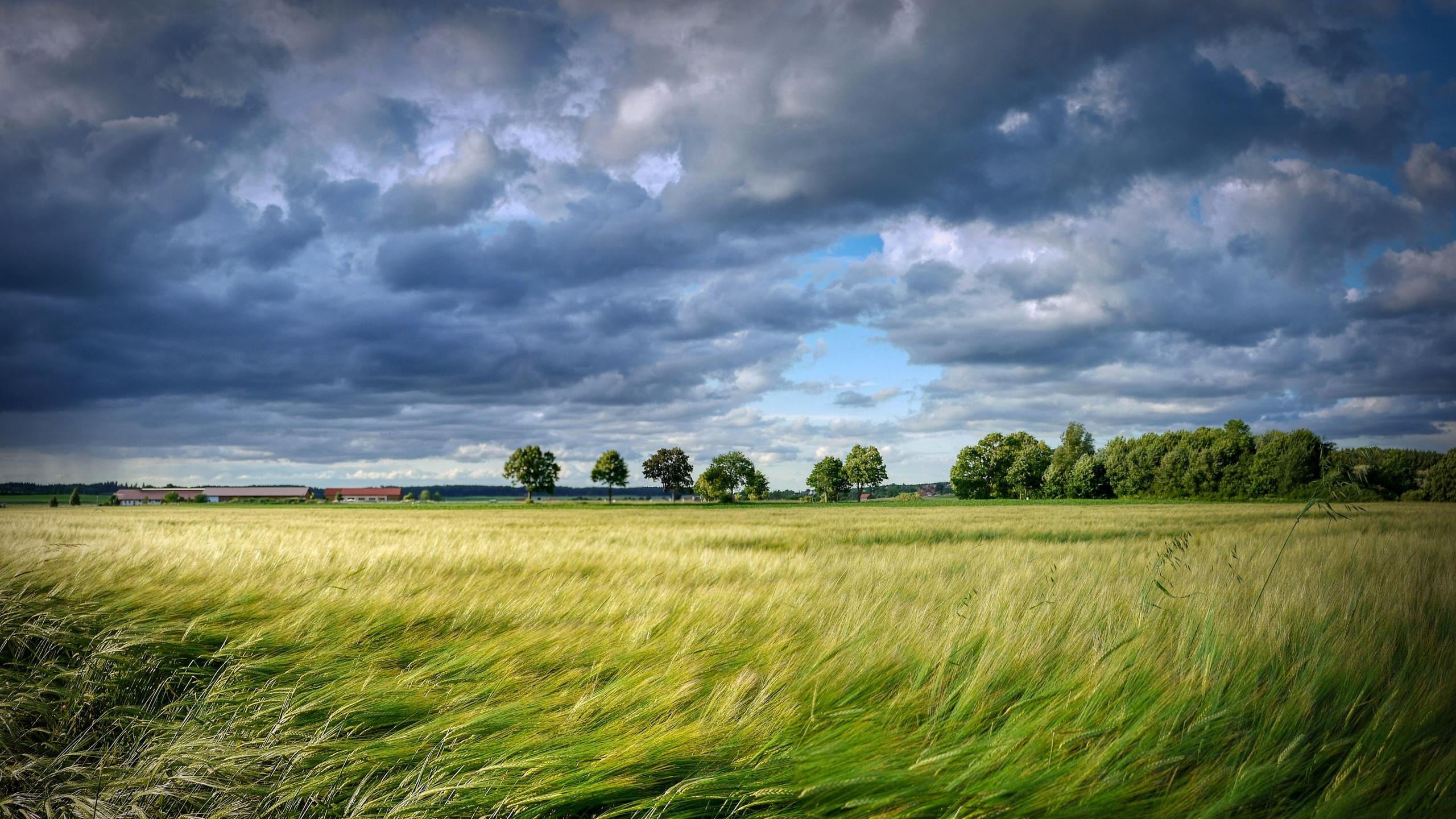 поле, кукуруза, урожай, небо, облака