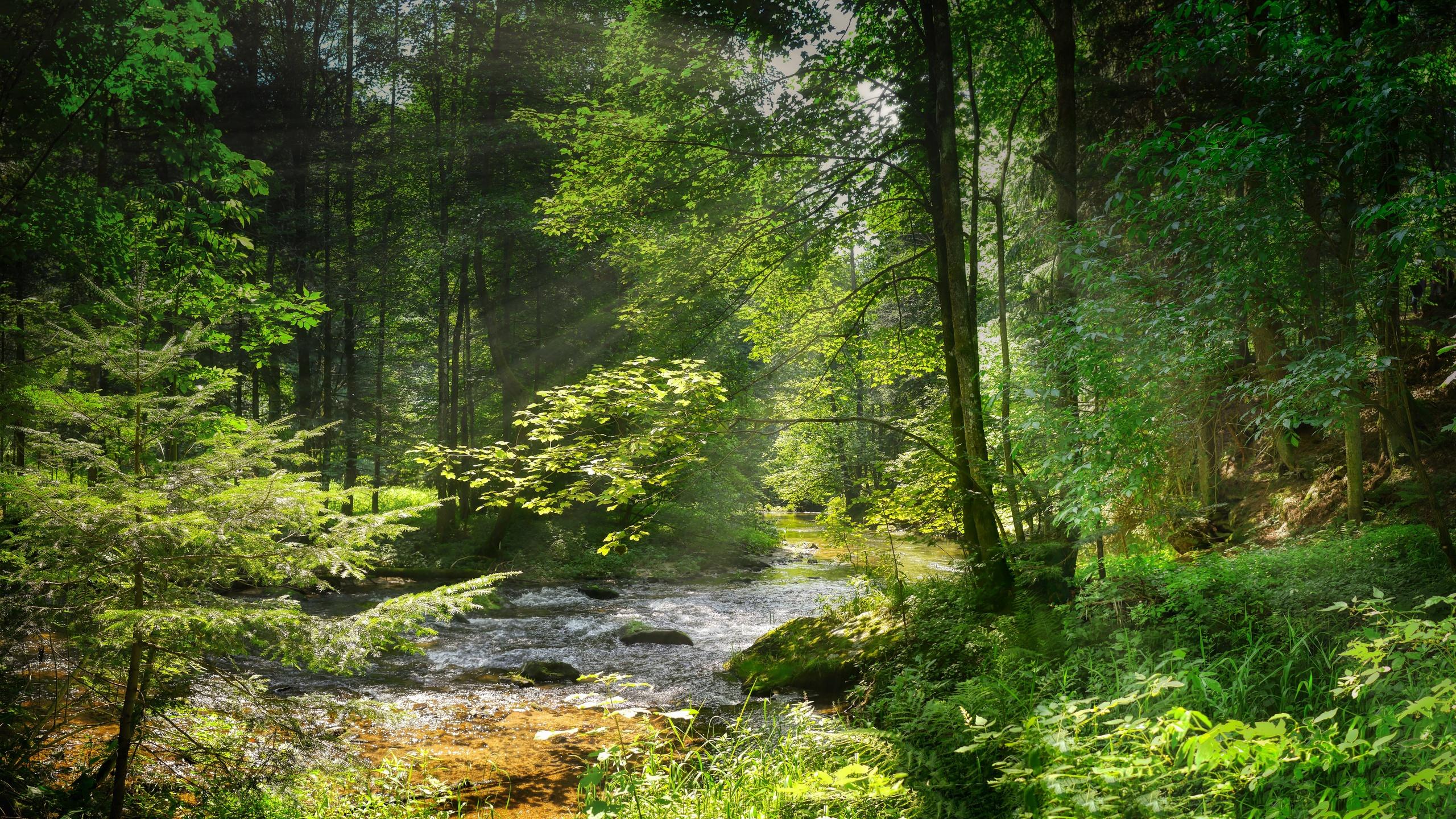 река, деревья, лес, трава, кусты, лучи солнца