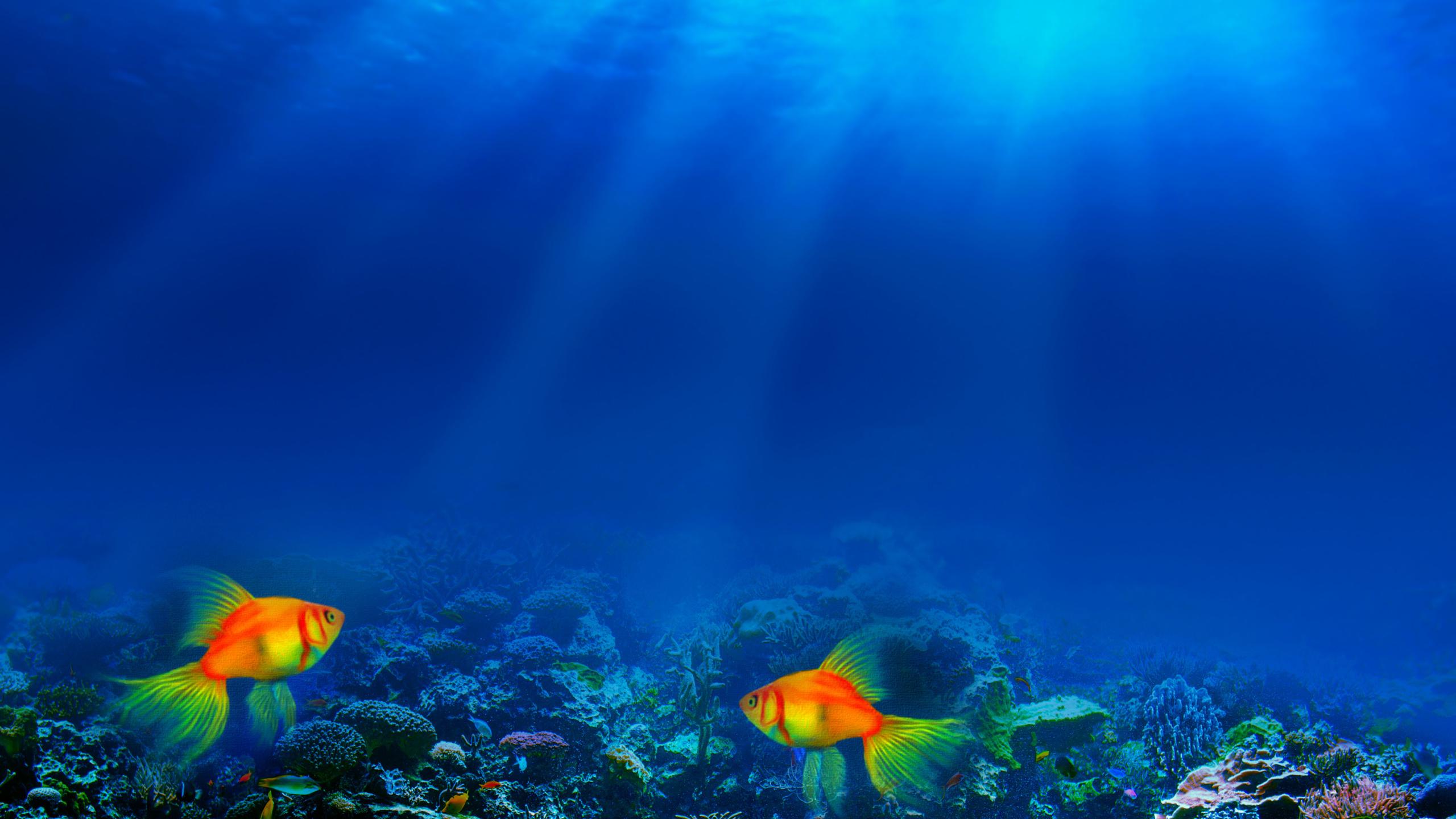 океан, подводный, мир, небо