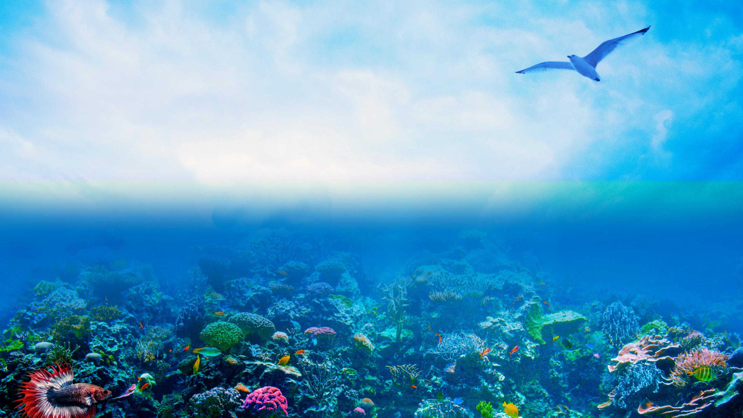 океан, небо, подводный, мир
