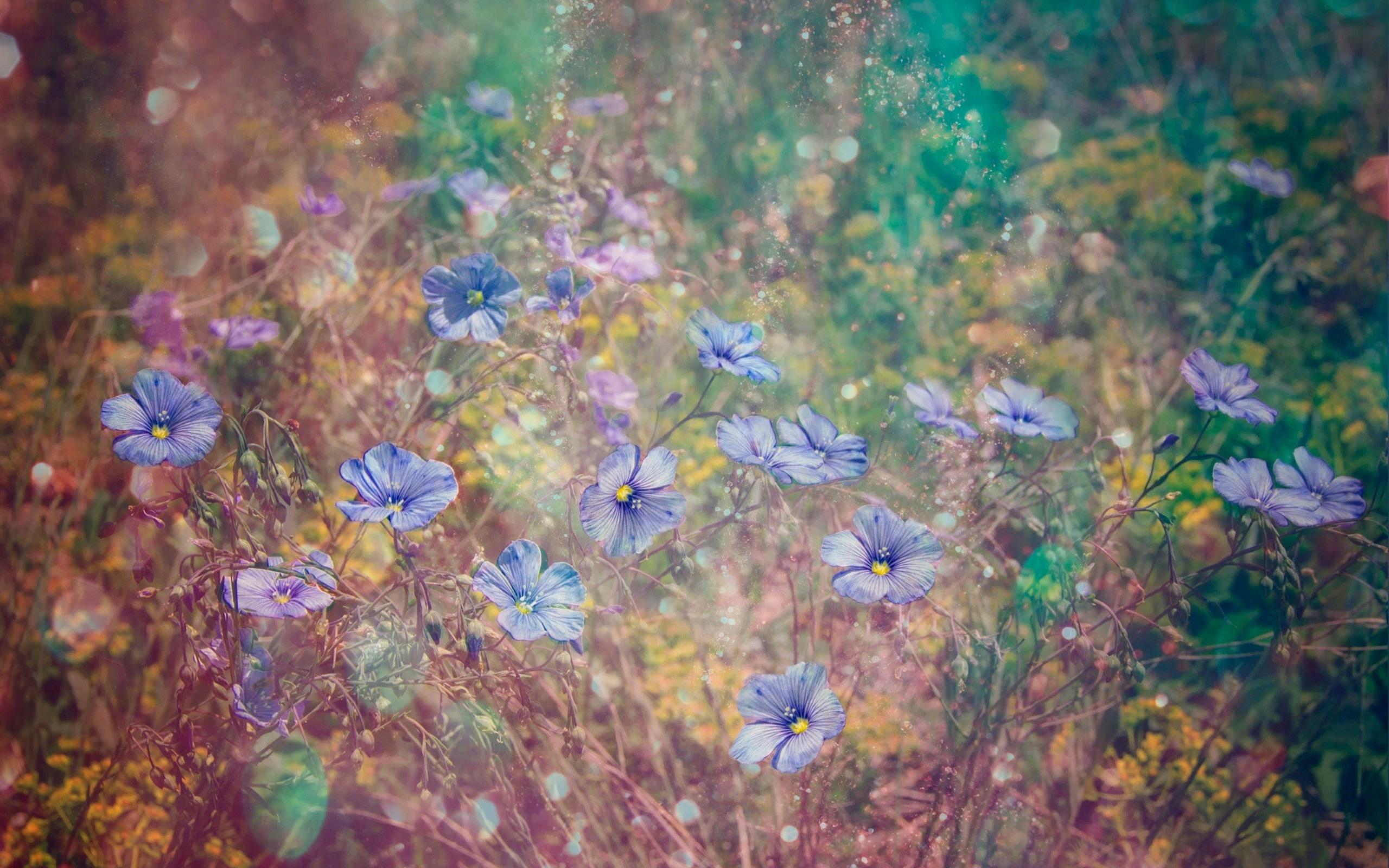 фиолетовый, цветы, полевые цветы