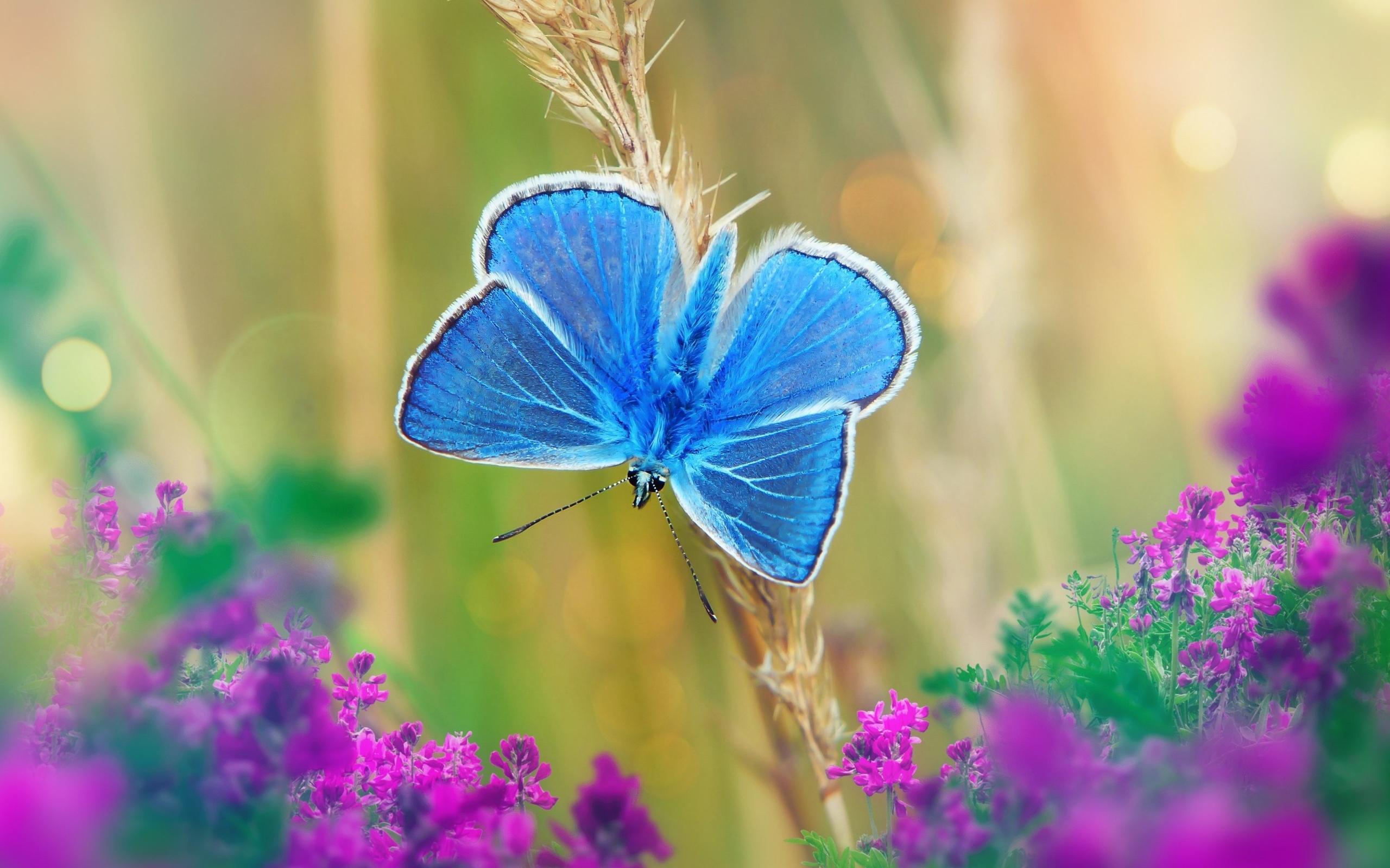 голубая, бабочка, цветы