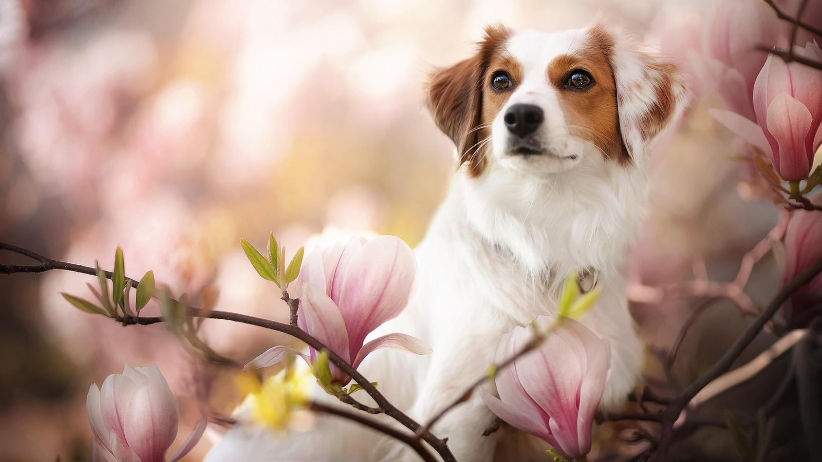 животное, собака, пёс, природа, ветки, цветки, магнолия, боке