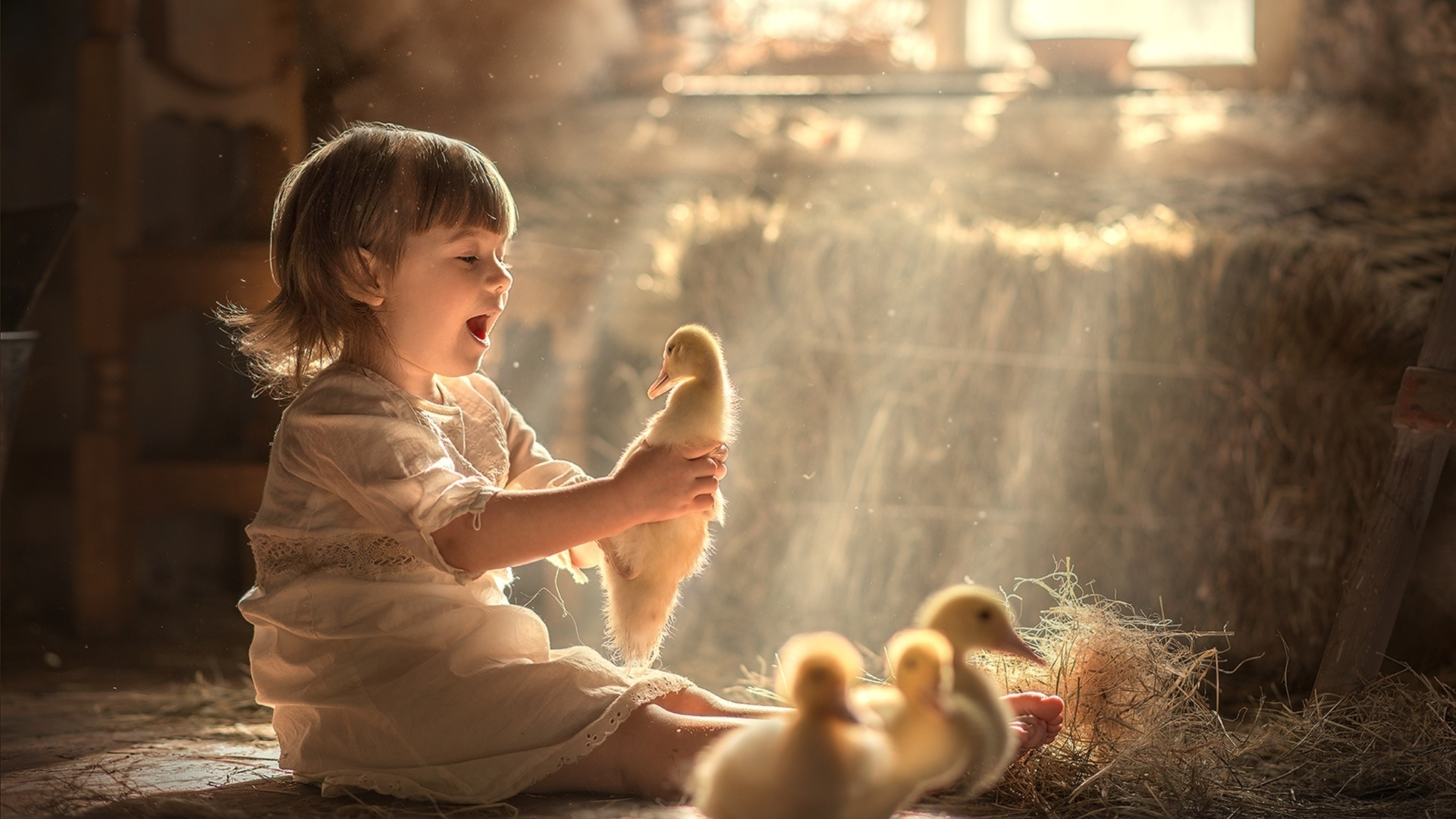 ребёнок, девочка, малышка, птицы, гусята, сено, окно, свет
