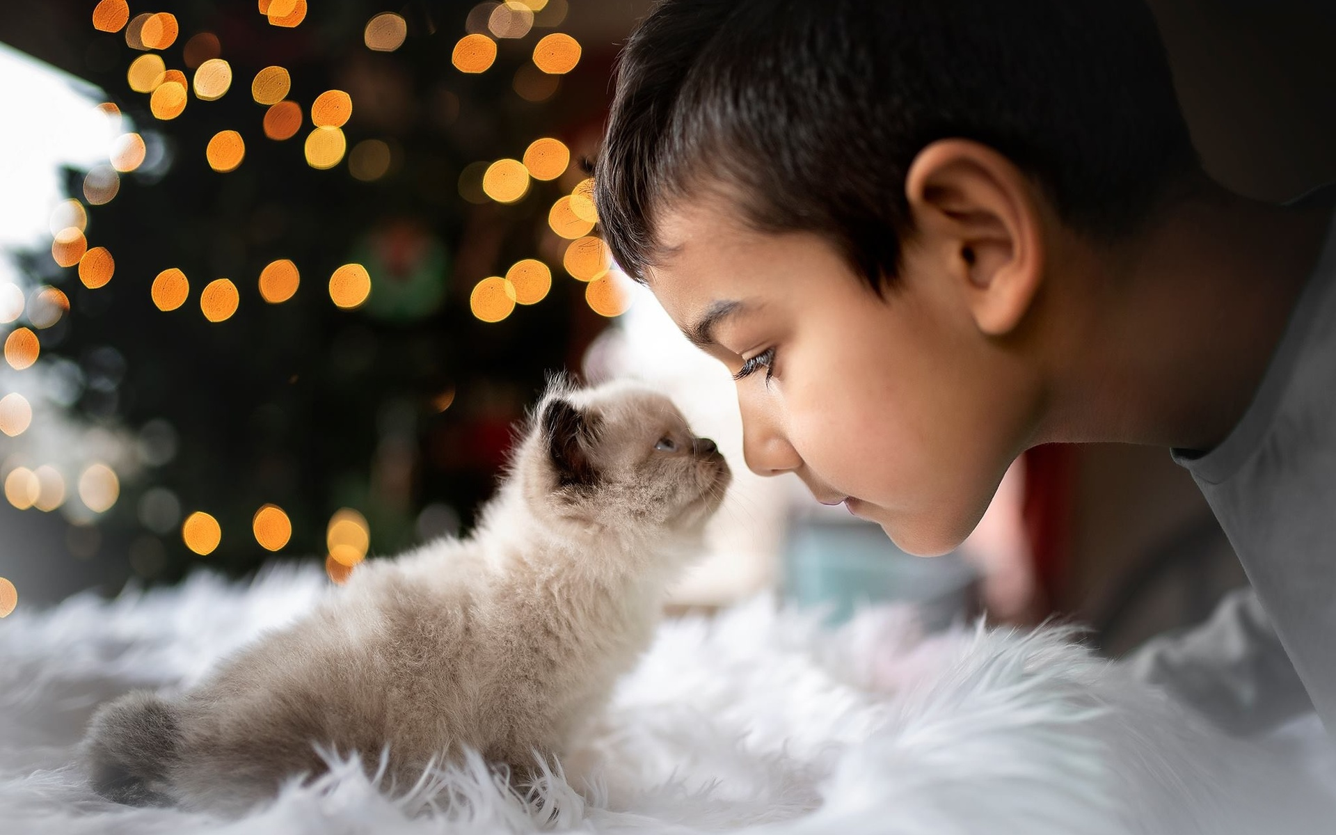 мальчик, котёнок, друзья