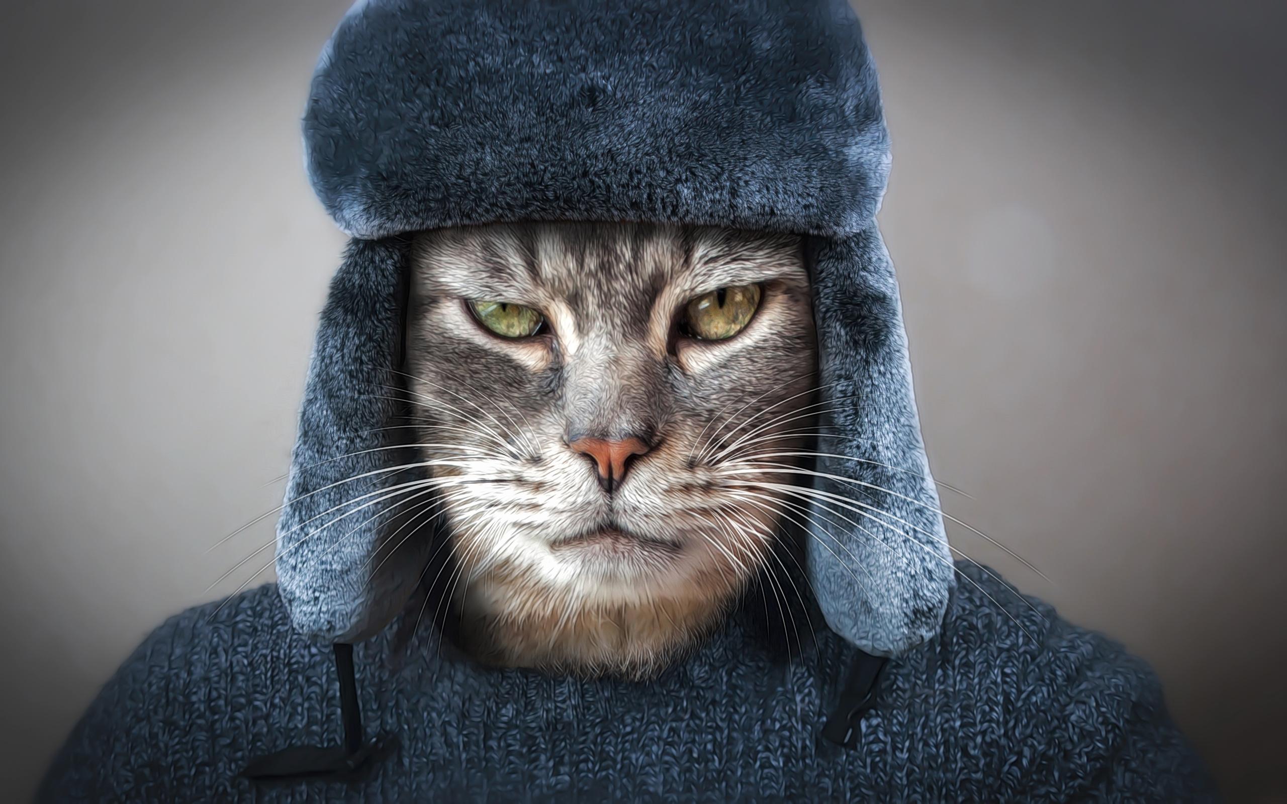 глаза, кот, взгляд, морда, рендеринг, серый, фон, одежда, шапка