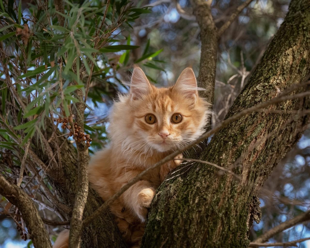 рыжая, кошка, дерево, ветви