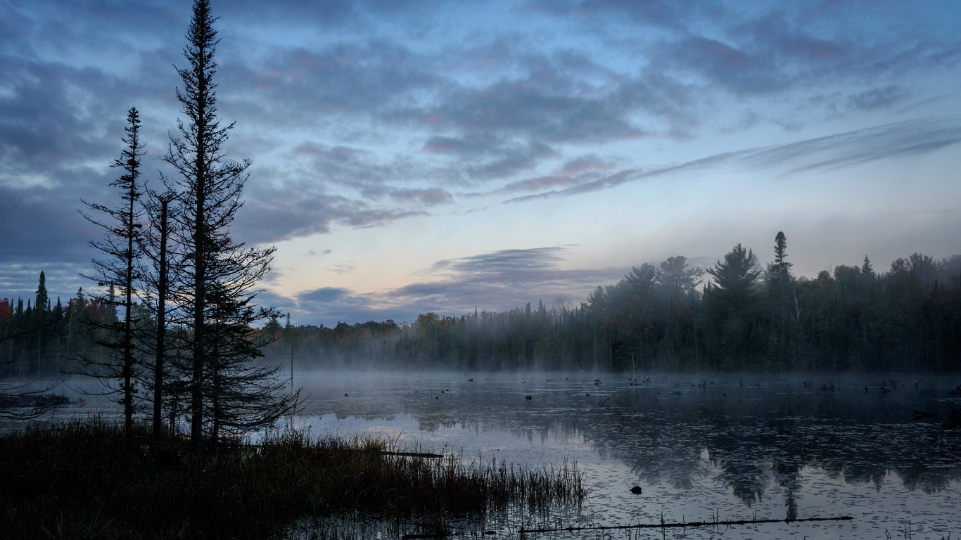 болото, деревья, туман, лес
