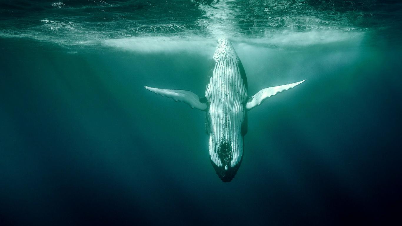 кит, подводный мир