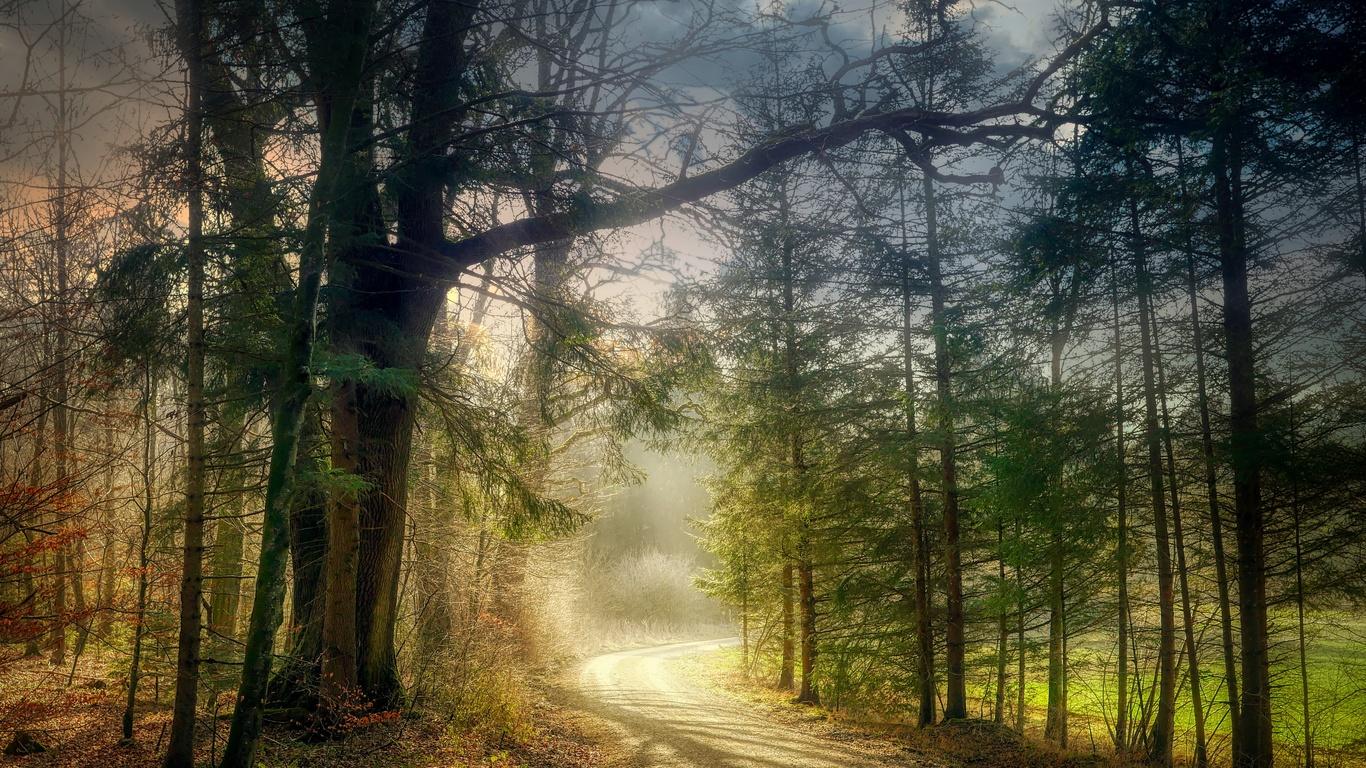 закат, дорога, лес, деревья, туман, пейзаж