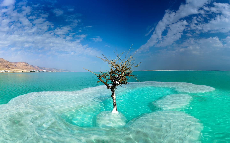израиль, море, небо, dead sea, neve zohar, деревья, облака, природа